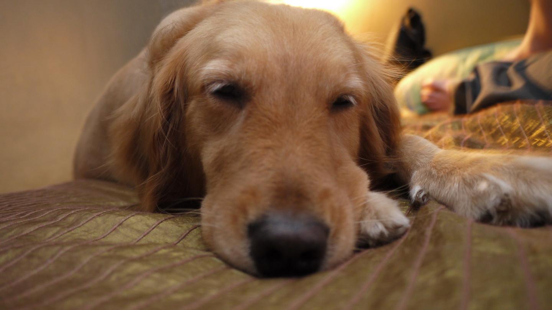 宝宝不想起床图片动物