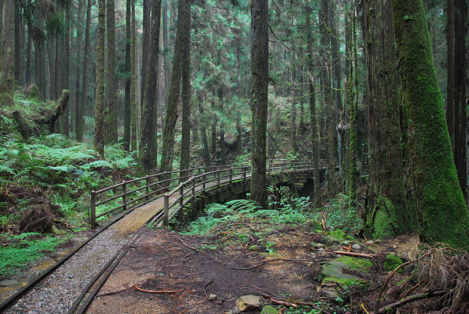 壁纸 风景 森林 桌面 1600_1071