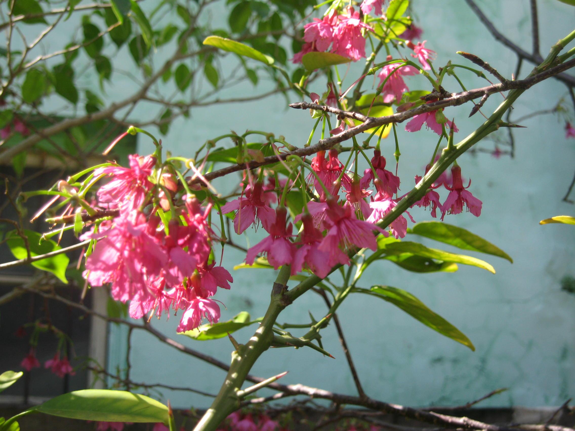 春天开花图在线观看,夏季开花的树